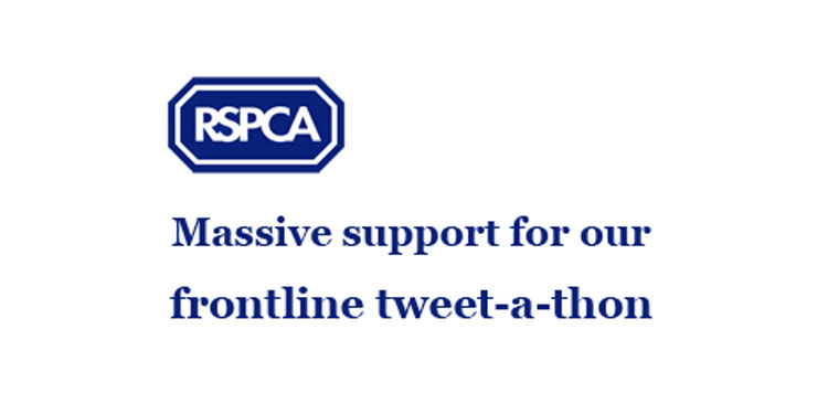 rspca-1 From Tweet-a-Thons to Petitions: social media campaigns for causes