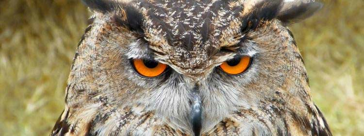 owl Useful Tools for Populating Your Design With Sample Content