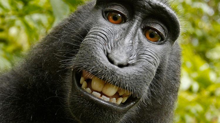 Monkey copyright